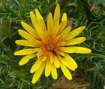 703px-Yellow_flower_with_critters.jpg